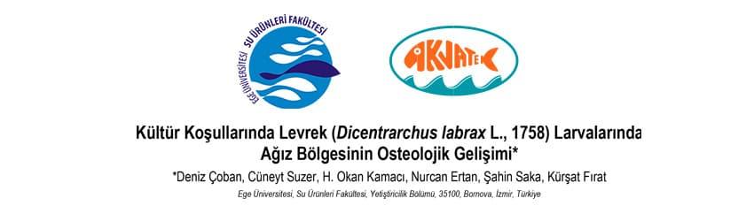 Read more about the article Kültür Koşullarında Levrek Larvalarında Ağız Bölgesinin Osteolojik Gelişimi