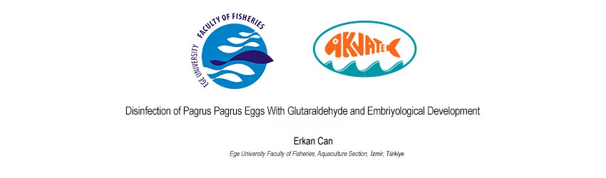 Read more about the article Disinfection of Pagrus Pagrus Eggs With Glutaraldehyde and Embriyological Development
