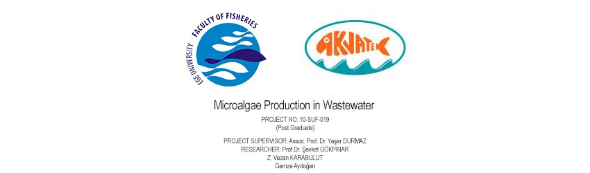 Read more about the article Microalgae Production in Wastewater